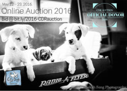 9pm Studios supporting City Dogs Rescue's online auction